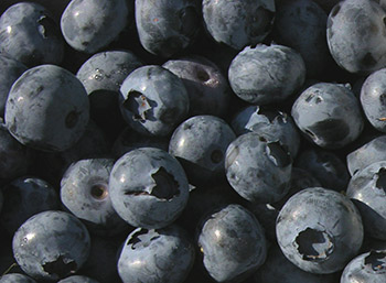 Blueberries are a superfood that is an excellent source of vitamin K and manganese, and a good source of vitamin C and fiber.