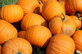 Pumpkin is an excellent source of vitamin A, and a good source of fiber, vitamin C, riboflavin, potassium, copper, and manganese.