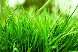 Grass allergy symptoms become relevant as pollen circulates in the wind once grass starts to grow from late spring into summer.